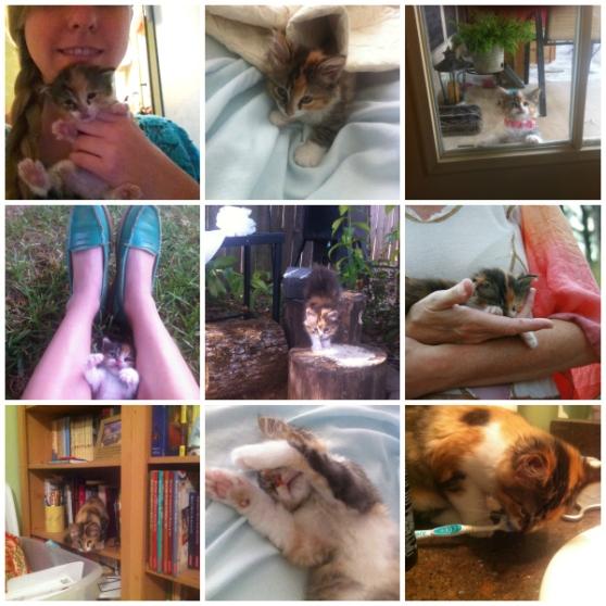 katniss collage